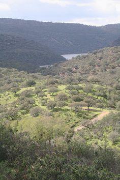 Parque Nacional de Monfragüe. Cáceres. Extremadura. Mar10