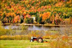 Colored Leaves, New Brunswick, Scenery, Canada, Landscape, Paisajes, Nature