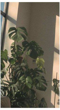 Sage Green Wallpaper, Plant Wallpaper, Summer Wallpaper, Wallpaper Backgrounds, Tropical Wallpaper, Pretty Backgrounds, Summer Backgrounds, Iphone Backgrounds, Aesthetic Pastel Wallpaper
