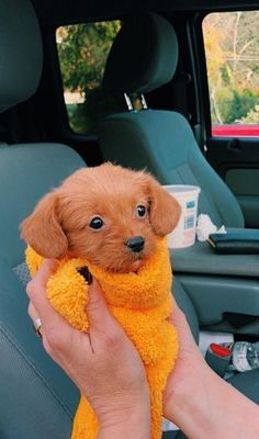 from milagros - tiere - Puppies Super Cute Puppies, Cute Baby Dogs, Cute Little Puppies, Cute Dogs And Puppies, Cute Little Animals, Cute Funny Animals, Doggies, Small Puppies, Puppies Puppies