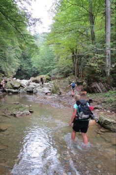 Outdoor-Seminar für Mensch und Hund Mountains, Nature, Travel, Outdoor, Pet Dogs, Outdoors, Naturaleza, Viajes, Destinations