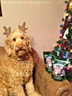 Just received Blue Wilderness Trail Treats Grain-Free Duck Biscuits in the mail from my aunt and uncle. #Goldendoodle #Christmas