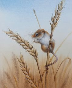 """Harvest Mouse"" by David Finney - Wildlife Artist & Illustrator Animal Paintings, Animal Drawings, Art Drawings, Maus Illustration, Illustration Animals, Pet Mice, Little Critter, Wildlife Art, Cute Art"