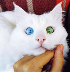 nice 20 Cute Googly Eyes Cat Prove You Don't Have To Be Cute To Be Loved