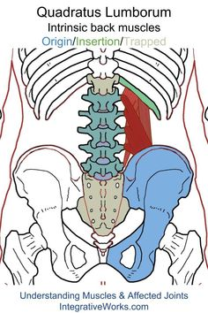 Trigger Points – Pain Around the Crest of the Hip | | Integrative Works