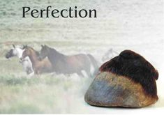 The true natural hoof (not just a bare hoof) - a look at wild equine hooves that are our only true models for the natural trim. This is THE model and is what we strive for in our domestic #horses.