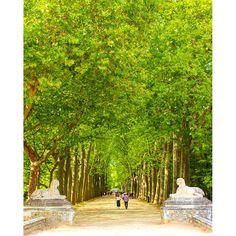 【12725_ansta】さんのInstagramをピンしています。 《#シュノンソー城#城へと繋がる道#フランス#緑#森林#自然#緑#ファインダー越しの私の世界#カメラ女子#カメラ好きな人と繋がりたい#デジタル一眼レフ#東京カメラ部#camera#canon#photographer#photography#picture#ig_japan#travel#travelgram#trip#ig_good》