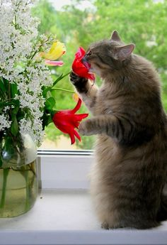 She stood to smell the flowers!