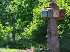 Bird condo!  A tree stump left tall has all sorts of possibilities.