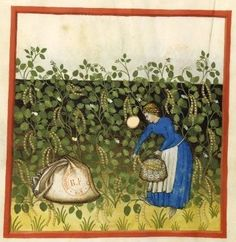 Early American Gardens: Growing & harvesting flowers, nuts, herbs, fruits & vegetables in the 1400s illuminated manuscripts