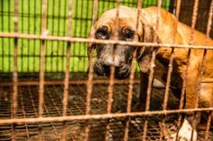 Dog Rescued From Meat Farm After Living In A Cage His Whole Life
