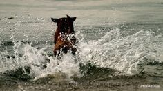Animais/Water Dog