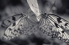 Black and white portraits of animals by Photographer Antti Viitala- Pics) Moustaches, Insect Photography, Animal Photography, Black And White Portraits, Black And White Photography, Art Sites, Animal Kingdom, Monochrome, Two By Two