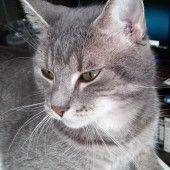 Švédsky rezeň (fotorecept) - recept | Varecha.sk Momofuku, Cats, Animals, Gatos, Animales, Animaux, Animal, Cat, Animais
