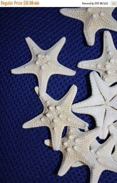 """15 BLEACHED REAL WHITE FINGER STARFISH 3/"""" WEDDINGS CRAFTS SEA SHELL"""