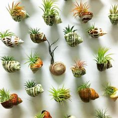 Air plants decor - 12 Best Amazing Air Plant Display Ideas to Add Uniqueness to Your Home