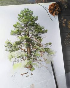 Likes, 12 Comments - Watercolor illustrations (Abbey Briscoe. Watercolor Trees, Watercolor Landscape, Watercolor And Ink, Watercolor Illustration, Watercolour Painting, Painting & Drawing, Landscape Paintings, Watercolours, Watercolor Techniques
