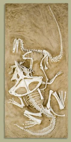 """Em 1971, um fóssil surpreendente foi descoberto, no deserto de Góbi, Mongólia (que, aliás, é um dos tesouros mundiais da paleontologia): um Velociraptor e um Protoceratops preservados bem no """"meio"""" de uma briga"""