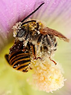 WE NEED OUR BEES! ~  sooo thankful for the hardwork of Bees!!!
