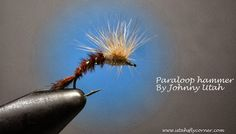 Utah's Fly Corner
