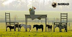 Nos encanta esta imagen surrealista de caballos bajo la mesa.