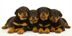 .I want Diva to have puppies!