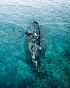 You sunk my battleship 💥 - ↠ History lesson time -This wreck was carrying cattle when it clipped the reef due to a cyclone in The hull sat on the reef until World War II when allied planes used it for bombing practice. Coast Australia, Visit Australia, Melbourne Australia, Western Australia, Australia Travel, Australia Beach, Queensland Australia, Australia Living, Brisbane