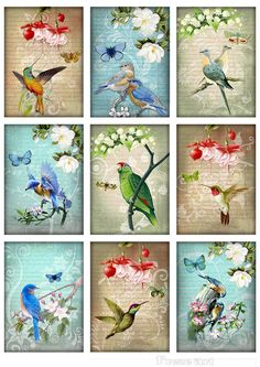 Greeting Cards 2.5x3.5inch - Digital Collage Sheet - Printable Download - Craft Supply - VINTAGE BIRDS. $3.20, via Etsy.
