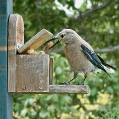 Fall Bird Feeding Tips  Fall is the time to clean and stock feeders and to stock up on birdseed.