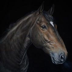 Evening all! Just finishing a long day at work, finished up a Graphite and Colour pencil commission today! - - - - #art #artist #horse…