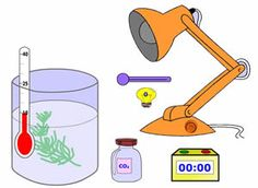 Virtual labs on photosynthesis:  Lab 1: Measures the growth of plants (measure height) Lab 2: Measures the rate of photosynthesis (count bubbles)