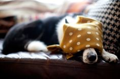 rainy days make for a grumpy, lazybean - a house in the hills - interiors, style, food, and dogs