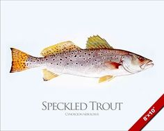 Trout Fishing in America Critical Essays