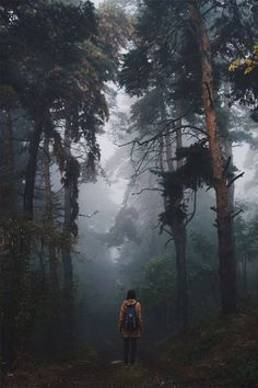 Deep in the forest you can feel so lost in wonder and serenity. Everyone needs this now and then.