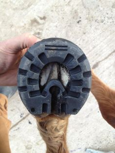 The Best Of Both Worlds - A Hoof Protection Device That Still Allows The Hoof To Function As A Bare Hoof - Hoof Boot News | EasyCare