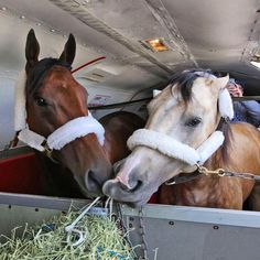 American Pharoah and Smoky snack, while flying back to Kentucky, on Air Horse One.