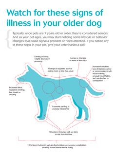 Watch out for these signs of illness in your older dog!