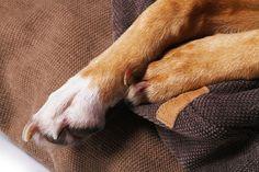 Individuell gefertigte Hundekissen für den Innen- & Aussenbereich von ADAM PILLOWS