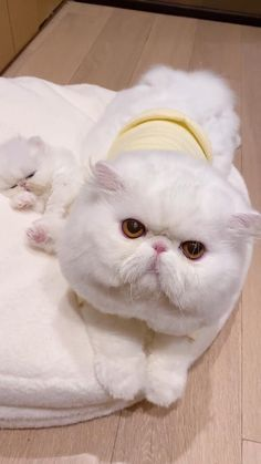 Cute Cat Memes, Funny Cute Cats, Cute Baby Cats, Cute Cat Gif, Cute Cats And Dogs, Baby Dogs, Cute Funny Animals, Kittens Cutest, Cute Wild Animals