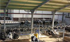 [b]Boerderij[/b] - Uitzicht op de koeien vanaf de loopbrug over de stal FarmCamps Breehees