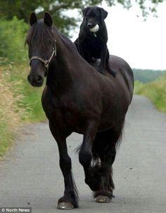 hu. mooi paard trouwens.