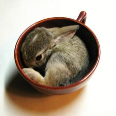 Take some time in your busy coffee day to show tender kindness to one of the animals who share our world. Just love some bunny.