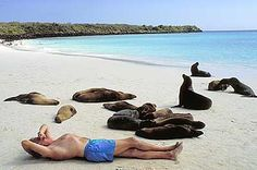 Would LOVE to go to the Galapagos Islands and see all the animals there... and be this guy hanging out with seals :0)