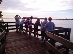 #BirdWatching at #LeffisKey on #AnnaMariaIsland. This dock is overlooking #Sarasota #Bay. We found Snowy Egret, Terns, Belted Kingfisher and a Little Green Heron. Head over to AMIBirdNerd.com and plan your Anna Maria Island Binocular Rental for 90 minutes or half day of Bird Watching.