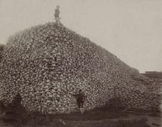 The Near Annihilation of America's Buffalo in Pictures