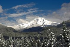 Snowy Trees - Mount Hood from Lolo Pass Road with Old Maid Flat in the foreground.
