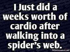 I just did a weeks worth of cardio after walking into a spider's web… hall… I just did a weeks worth of cardio after walking into a spider's web… halloween spider halloween quote halloween humor funny halloween spider web Halloween Humor, Halloween Quotes, Happy Halloween, Halloween Pictures, Halloween Spider, Love Is In The Air, It Goes On, I Love To Laugh, Make You Smile