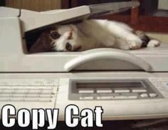 Copy Kitten Kitty - Trying Hard Copy Cat Quotes - Funny Animal Pictures With Captions - Very Funny Cats - Cute Kitty Cat - Wild Animals - Dogs and like OMG! get some yourself some pawtastic adorable cat apparel! Humor Animal, Funny Animal Quotes, Funny Animal Pictures, Funny Animals, Cute Animals, Wild Animals, Cat Lol, Crazy Cat Lady, Crazy Cats