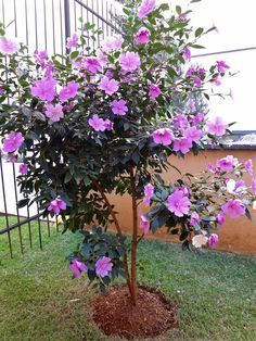 Flores Flores qvc inspire me home decor - Home Inspiration Garden Art, Colorful Plants, Gardening Apps, Flowering Trees, Garden, Outdoor Gardens Landscaping, Plants, Hibiscus Flowers, Landscaping Plants