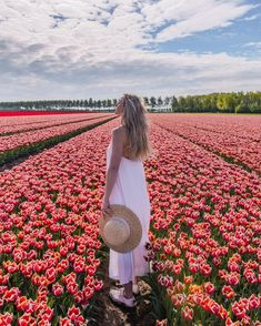 Enjoying this beautiful red tulip fields in the Netherlands! Tulip Fields, Red Tulips, Life Is Beautiful, Netherlands, Holland, Photoshoot, Memories, Flowers, Photography